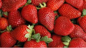 fraises-diabete